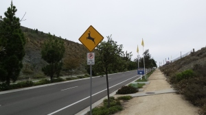 Deer Crossing On San Elijo